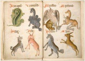 Nei bestiari medievali almeno, in mezzo a improbabili animali immaginari, si trovavano anche animali realmente esistenti.